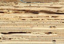 Viga de madera dañada por un gusano
