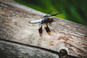 termita madera