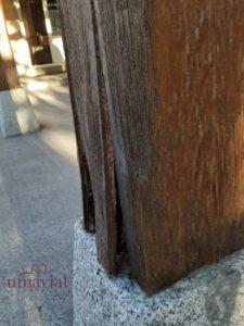 viga de madera con termitas